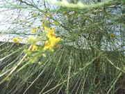 4-17-08_garden_006.jpg